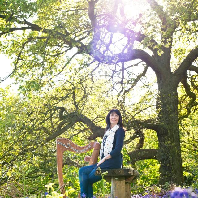 Dunham Massey bluebells, oak tree, oona linnett,