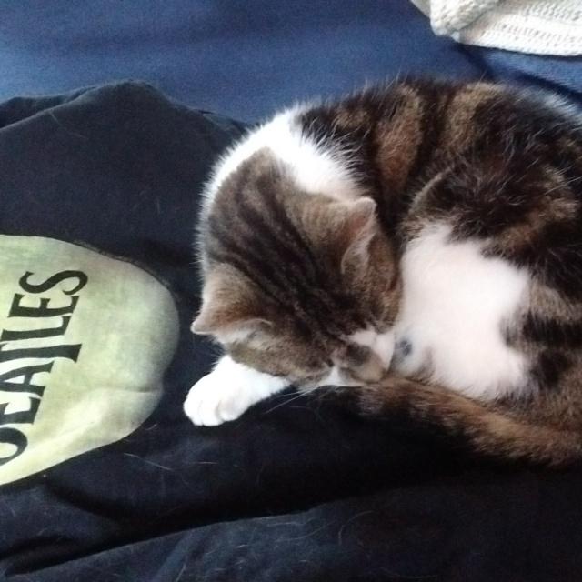 Jessie sleeps on a Beatles sweatshirt