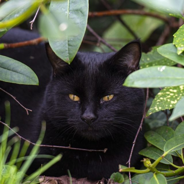 Cat hiding in the bushes.