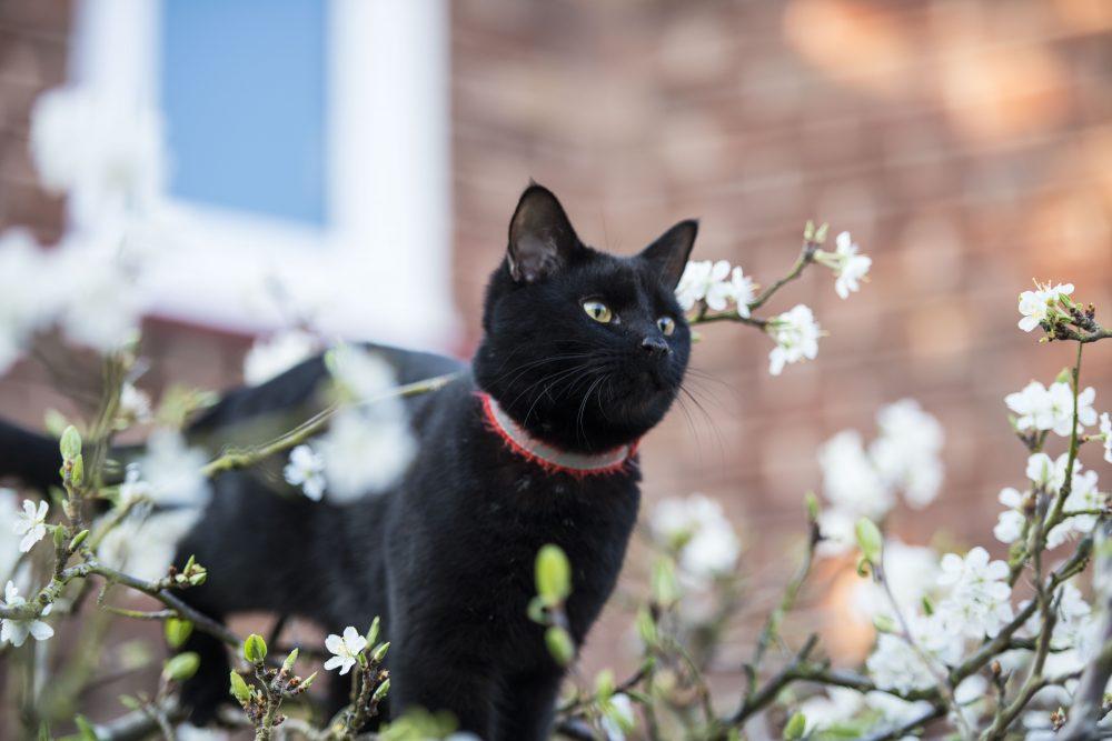 Cat in a plum tree.